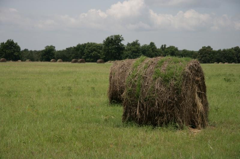 shaggy bales