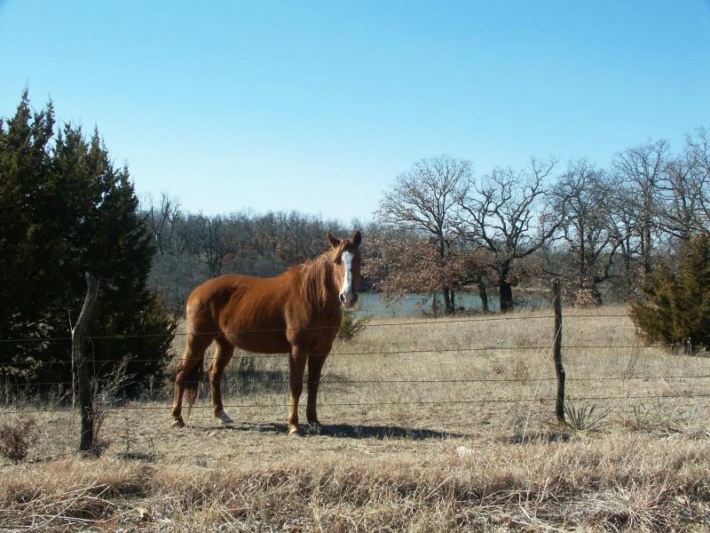 Horse says Hi