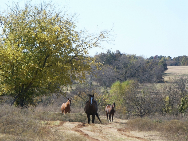 Intimidating Horses
