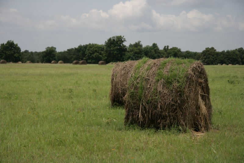 Even the Haybales Have a Rug